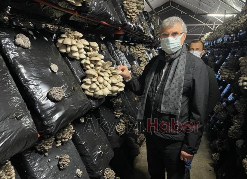 Başkan Yüce, 10 K'nın Mantar Tesisinde hasat yaptı